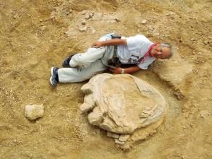 発掘した世界最大級の足跡化石